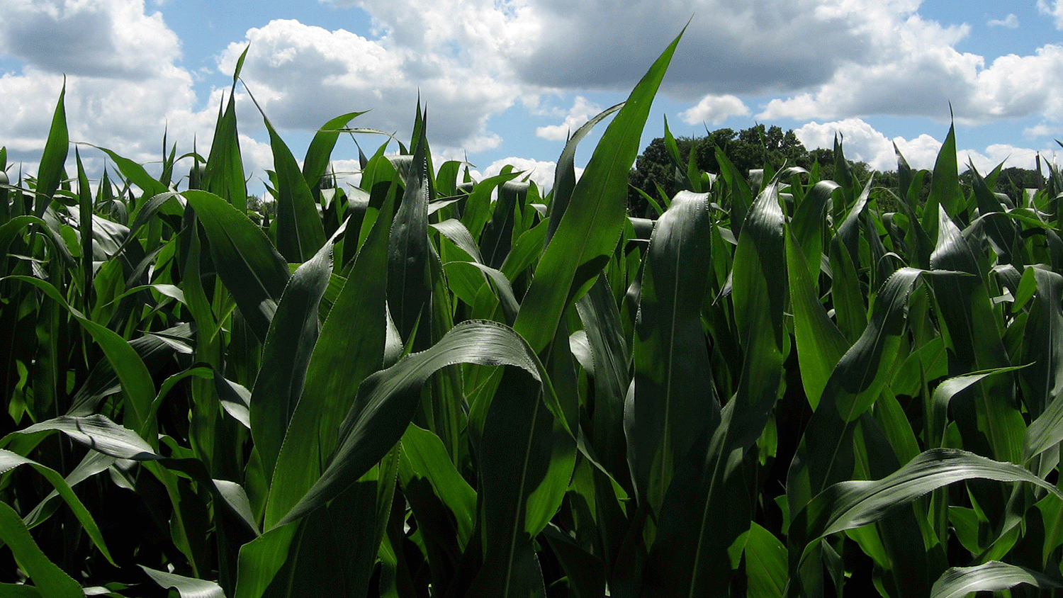 Conservis_Row_Crop_Management_Software_Folder_Corn