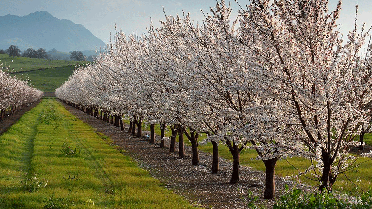 Conservis_Permanent_Crop_Management_Software_Folder_Orchard_Bloom