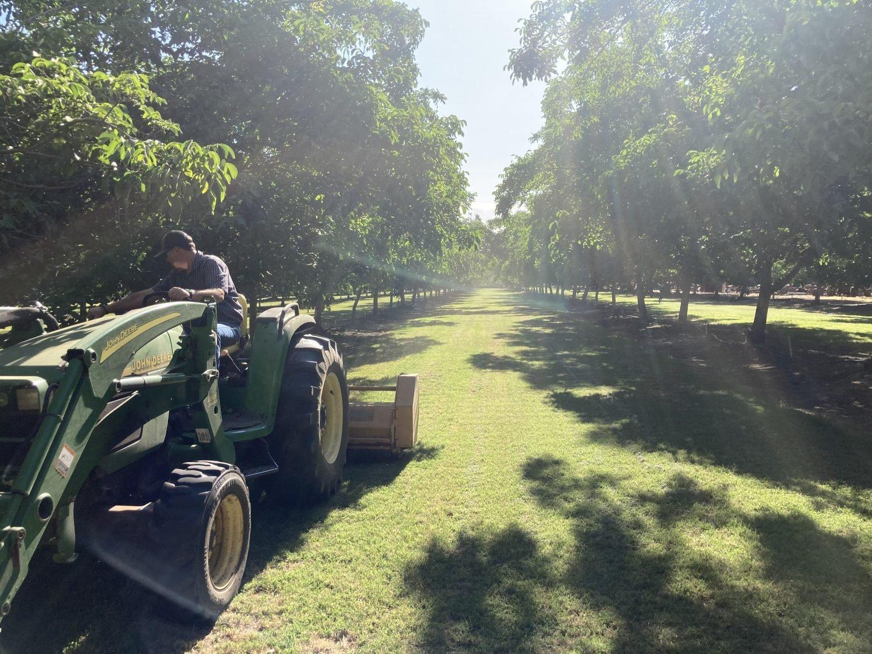 Perm crop Brody Blain the farmer on Blain Farming Co orchard spraying walnut trees