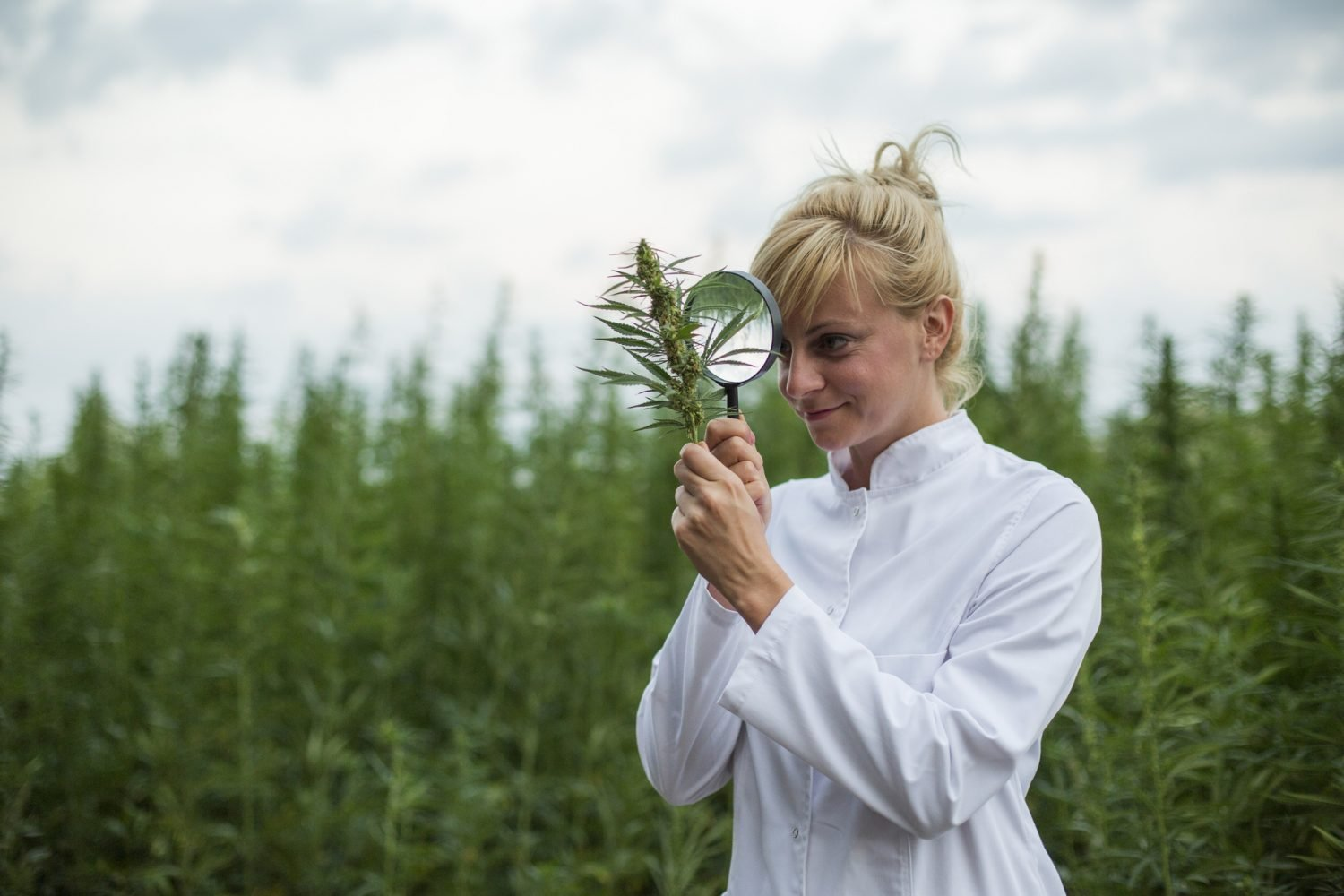 Woman in a hemp field with magnifying glass