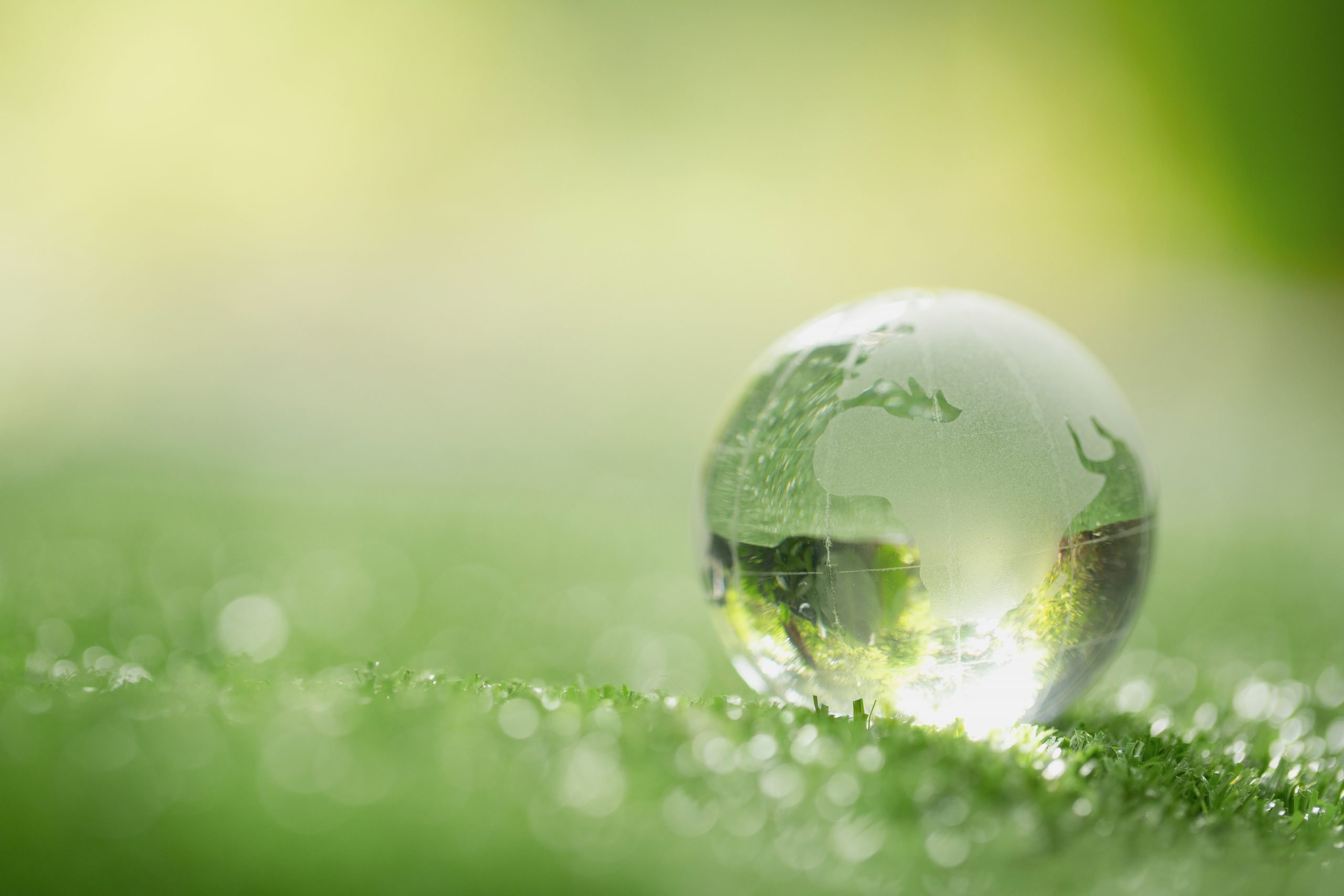 Close up of crystal globe resting on grass in a forest indicating global sustainability
