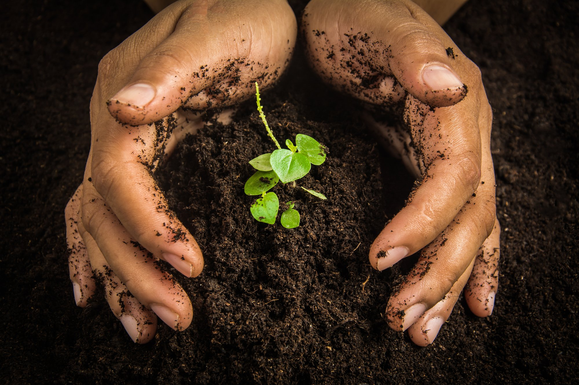 Woman's hands holding a pile of soil